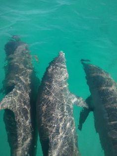 dolphin safari and snorkeling