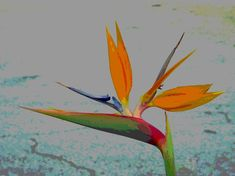 Floral Note Card. Bird of Paradise. Stunning Original Design on Premium Matte 5x7 Card Stock. Blank Interior Perfect For Your Note. by VintageArtForLiving on Etsy www.etsy.com/...