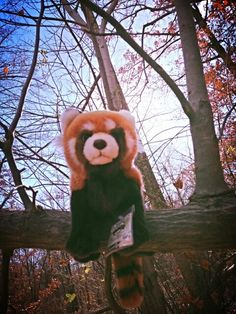 Red panda I can look at these all day They are so cute!!!!!!!!!!!!!!!!!!!!!!!!!!!!!!!!!!!!!!!!!!!!!!!!!!!!!!!!!!!!!!!!!!!!!!!!!!!!!!!!!!!!!!!!!!!!!!!!!!!!!!!!!!!!!!!!!!!!!!