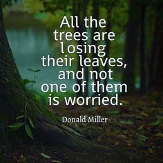 Trees quotes nature, beauty in nature quotes, tree of life quotes. The Words, Phrase Cute, Quotes About Attitude, Quotes About Nature, Quotes About Trees, Quotes About The Woods, Quotes About Hiking, Quotes About Forest, Trees Quotes Nature