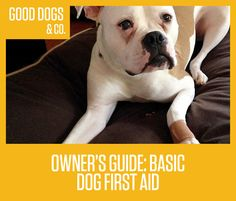 A brief guide on handling first aid for your dog in minor accident situations. Always seek medical attention if your dog is seriously injured!