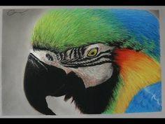 Dibujo Gis Pastel - Guacamayo Azulamarillo