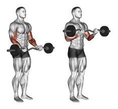 that you can get that great looking huge, and get a cannonball biceps, well you should work it on three points. So let's see 7 best biceps exercises Bar Workout, Gym Workout Tips, Workout Routines, Bodybuilding Training, Bodybuilding Workouts, Men's Bodybuilding, Fitness Workouts, Weight Training Workouts, Fitness Hacks