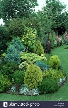 Stock Photo - Low growing conifers in a well stocked border in a suburban garden in summer Evergreen Trees Landscaping, Evergreen Landscape, Landscaping Shrubs, Evergreen Garden, Front Yard Landscaping, Landscape Plans, Landscape Design, Trees For Front Yard, Low Maintenance Landscaping