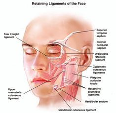 The retaining ligaments of the face are important in understanding concepts of facial aging and rejuvenation. Facial Nerve Branches, Surgery Journal, Facial Aesthetics, Medical Aesthetics, Facial Anatomy, Facial Exercises, Too Faced, Facial Massage, Beauty Tips For Skin