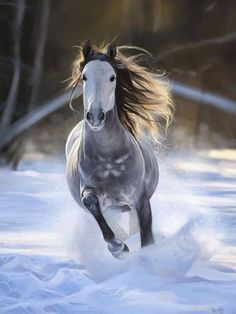 #HORSE##CUT##SNOW##ANIMALS#