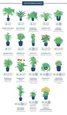 Aquaponics System - Selon la NASA, voici les plantes les plus efficaces pour purifier l'air de votre intérieur Ficus, Air Filtering Plants, House Plants Air Purifying, Air Purify Plants, Bamboo Palm, Indoor Bamboo, Bamboo Plants, Air Cleaning Plants, Plants That Clean Air