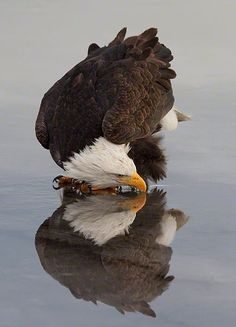 This eagle looks swift!
