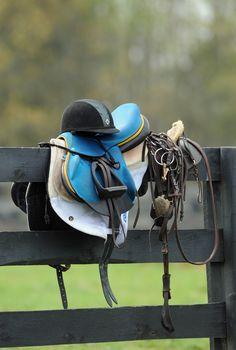 Blue saddle