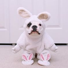 """Happy Easter!"" writes @mochi little frenchie. #dogsofinstagram #pets #instafollow #tagforlikes #F4F #FF"