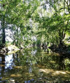 Discover magical tranquil spots to relax on a #bikeride in the #CharenteMaritime ! 🚴♂️🇫🇷 For #bike hire across the area contact Chris at @BikeHireDirectFrance Charente Maritime - head to link in bio to read more 🙂 🚴♂️🇫🇷 #TrefleRiver #NouvelleAquitaine #France #BikeHireDirect #DispoVelo #velo #cyclinginFrance #cyclismeenFrance France, Relax, Bike, Plants, Bicycle, Bicycles, Plant, Planets, French