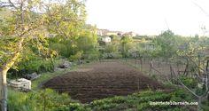 Labores, preparación el terreno