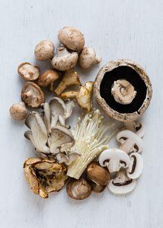 Guide-To-Mushrooms @The Mushroom Channel #MightyMushrooms