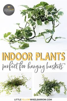 110 Best Indoor Plants Images On Pinterest In 2018 Container