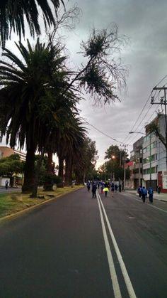 Gran Carrera Pascual,2015