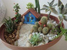 New Succulent Garden Design Stones Ideas Mini Cactus Garden, Mini Fairy Garden, Fairy Garden Houses, Cactus Flower, Cactus Terrarium, Garden Terrarium, Deco Cactus, Dish Garden, Cactus Y Suculentas