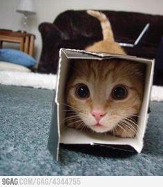 Uuy Uuuy! ternuritisss! Kitty-in-the-box