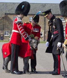 Prince William Photos - The Duke of Cambridge Visits The 1st Battalion Irish Guards For The St. Patrick's Day Parade - Zimbio