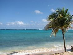 57 Best Ocho Rios Jamaica Images On Pinterest Vacation Places