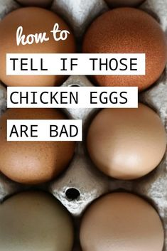 Ever wonder how to tell if those eggs in the fridge are still good to eat? I have your answer here! Also learn some tips and tricks on how to properly store your eggs! Raising Meat Chickens, Raising Quail, Raising Farm Animals, Raising Ducks, Raising Backyard Chickens, Chicken Feed, Chicken Eggs, Micro Farm, Duck Eggs