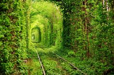 Tunnel of trees outside of Rivne, Ukraine.