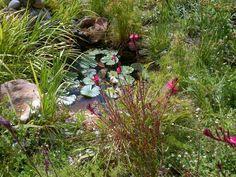 My garden pond..
