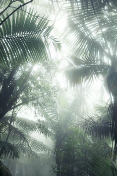 sun shining through the palm trees Photo Deco, Green Life, Ikebana, Palm Trees, Mother Nature, Plant Leaves, Flora, Exotic, Beautiful Places