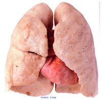 Medical and Health Science: Human lungs