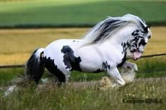 Synagogue: a mighty stallion who fears nothing of the sort! He rips through his fears trusting the spirit. A majestic sight I must say.