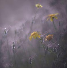 flowers Dandelion, Pretty, Nature, Flowers, Plants, Naturaleza, Dandelions, Plant, Taraxacum Officinale