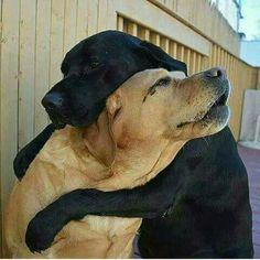 Doggy love.