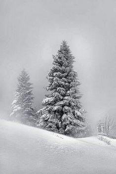 The Love of a White Christmas