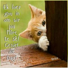 Goeie More, Afrikaans Quotes, Good Morning Wishes, Lent, Emoticon, Printable Art, Printables, Beautiful Pictures, Cats