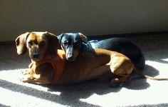 My weenies and enjoying the sun