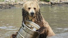 Should I be drinking local or sustainable beer? | Grist
