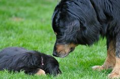 11 Dog Breeds You Probably Didn't Know Existed