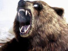 медведь скалится: 21 тыс изображений найдено в Яндекс.Картинках
