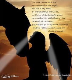 In Loving Memory Of My Horse(es) In Heaven; Donita, Joy, Buffy, Clipper They all lived happy lives until they went to Heaven My Horse, Horse Love, Horse Girl, Beautiful Horses, Animals Beautiful, Beautiful Creatures, Pet Poems, Horse Poems, Horse Sayings