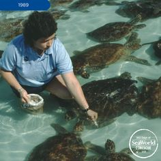 During a severe cold snap in 1989, dozens of hypothermic green sea turtles were rescued and cared for in recovery pools at SeaWorld Orlando for about 10 weeks. #365DaysOfRescue #FlashbackFriday