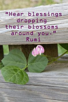 """""""Hear blessings dropping their blossoms around you."""" -- Rumi --"""