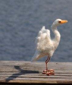 Hey, I found this really awesome Etsy listing at https://www.etsy.com/listing/105093964/needle-felted-egret-in-flight-sculpture