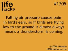 Falling air pressure causes pain in bird's ears, so if birds are flying low to the ground it almost always means a thunderstorm is coming.