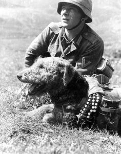 Werhmacht Service Dog Airedale Terrier ... well, the dogs didn't have a choice in the matter, did they :0(