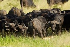 The management of Kruger Park in South Africa, where the attack took place, confirmed that...