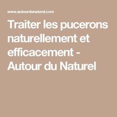 Traiter les pucerons naturellement et efficacement - Autour du Naturel