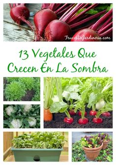 13 Vegetales Que Crecen En La Sombra - Squeeze Tutorial and Ideas Organic Gardening, Gardening Tips, Lawn Care Business, Garden Maintenance, Small Space Gardening, Growing Plants, Permaculture, Hydroponics, Trees To Plant