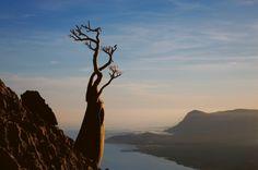 Le meraviglie di Socotra, l'isola da un altro mondo