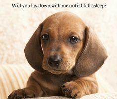 Will you lay down with me until I fall asleep?  Good night pet lovers!  #cutedog #dogs #anjinglucu #dogclotching #dogshirt #jualbajuanjing #jualanbajuanjing #bajuanjing #bajuanjingmurah #dogtoy #bajuanjingimport #bajuanjinglucu #talianjing #kalunganjing #kostumanjing #petshop #petshopindo #petstore #bubupetshop #petolshop #petstagram #igdog #instadog by bubupetshop #lacyandpaws
