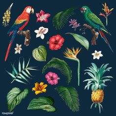 Colorful tropical collection with vintage illustration | free image by rawpixel.com Vector Can, Vector Free, Image Sites, Outdoor Pouf, Garden Of Earthly Delights, Garden Illustration, Plant Vector, Tropical Garden, Vector Design