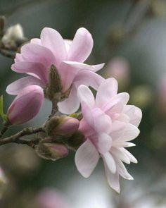 magnolien oder and pink on pinterest. Black Bedroom Furniture Sets. Home Design Ideas